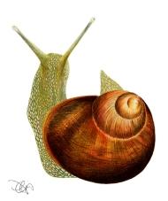 Ilustración dinA3 lápiz color